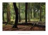 Wild wet wood