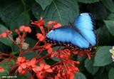 Jardin Botanique et Biodome