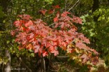 Automne 2012 (HDR)
