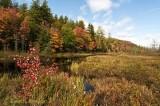 Oxbow Outlet, Adirondacks