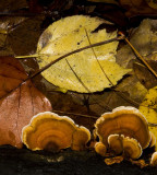 Fungus and Leaves