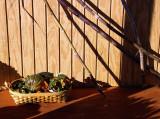 Basket and Sugar Cane