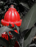 Fire Plug and leaves