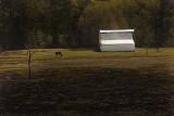 Tree, Horse and Barn