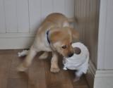 Puppysoft