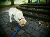 Fudge in the Park