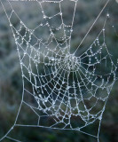 Winter Weaves Her Web