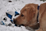 Fudge's first snow