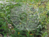 Probably an orb weaver's web