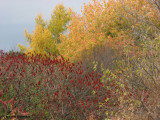 FWG in autumn