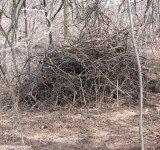 New brush pile for wildlife, north of Ash woods