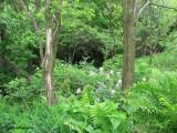 Ravine in spring