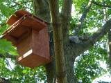 Grey squirrel house