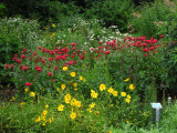 The garden in mid-summer