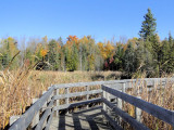 Mid-autumn at Jack Pine Trail
