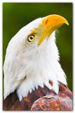 Eagle I