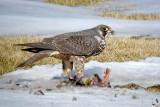 NS Birds, Scenics etc. Spring 2009