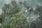 Web, nachtvorst