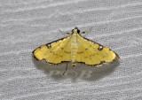 Moth 18