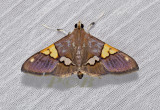 Moth 28