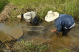 Installing fishtrap