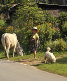 Walking with the pets