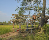 Ricefield cabin