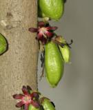 Wild fruit.