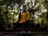 Forest Budha