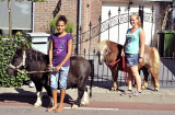 Kleine paardjes