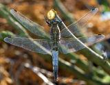 Gewone oever man tegenlicht, luchtvervuiling en spinneweb hechten zich aan de vleugels