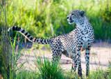 Kruger National Park - South Africa - Dec '08