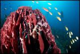 Pescador sponge & scorpionfish