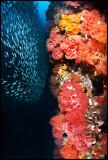 Pescador under the sardine run 4