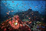 Batu Bolong fish soup 1