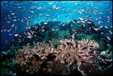 Batu Bolong fish soup 2