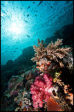 Tatawa Besar reefscape 1