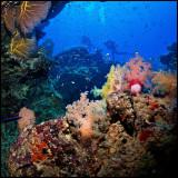 Coral scape Moso
