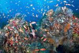 Lembongan Mangroves reef