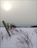 Ebinizer Road fence row