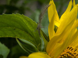 feather and a sunflower