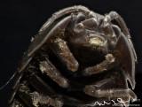 wood lice 2.jpg