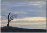 Otterville single tree.jpg