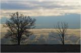otterville twin trees.jpg