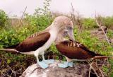 Galapagos Islands - 1996/97