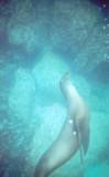 Galapagos Sea Lion.jpg
