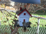 Sparrows fight over the feeder
