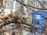 Baffled squirrel