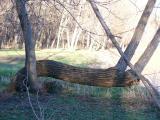 Crooked- Cottonwood-Yellow Banks Park, Vandalia Iowa