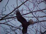 Big Eagle-Below Red Rock